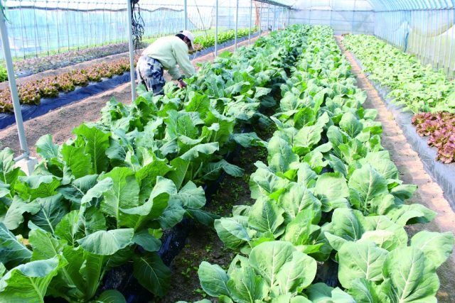 桷志田 有機農業の畑